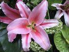 eine Blüte im Ritz Hotel Singapore