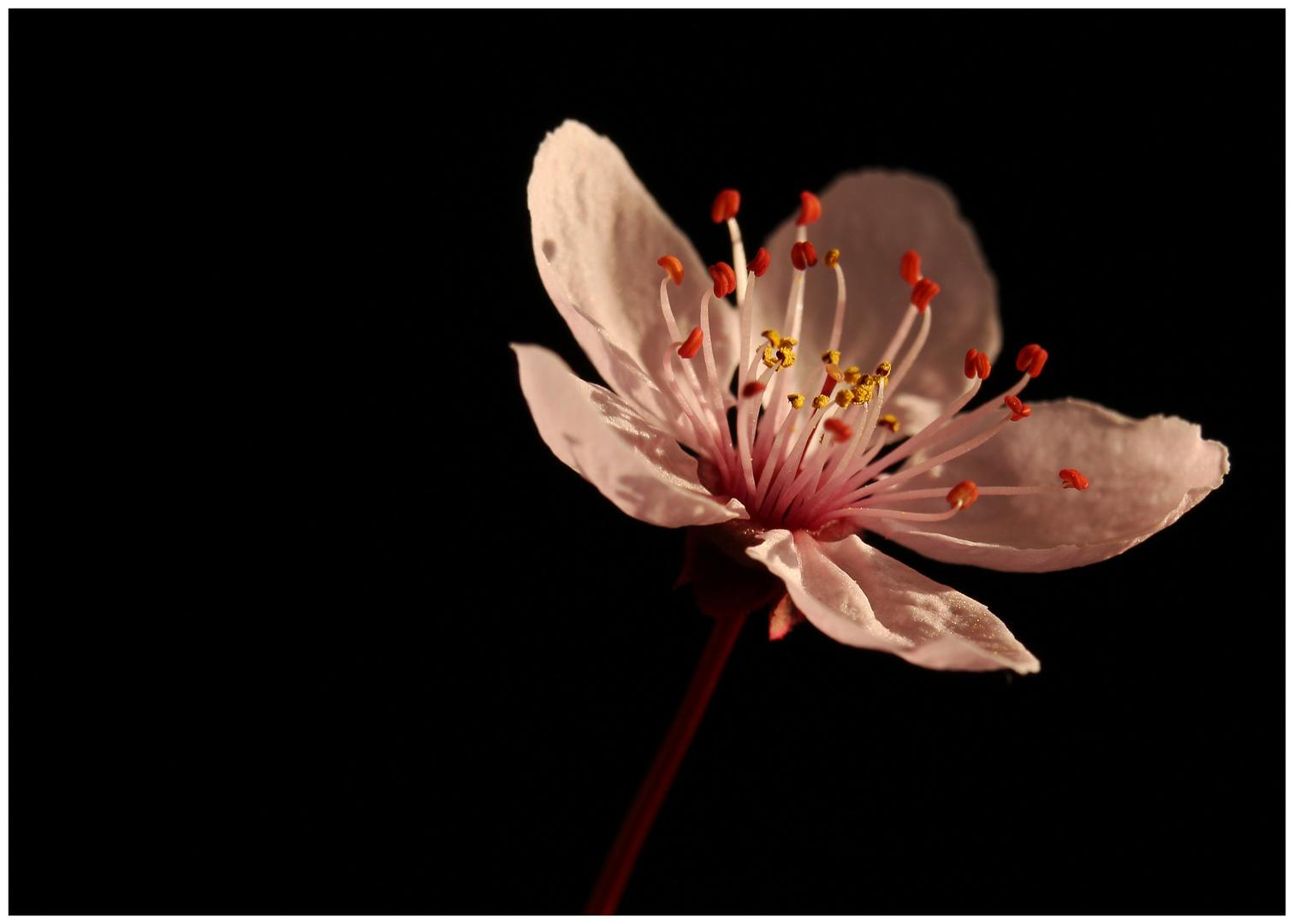 eine Blüte von Tausenden