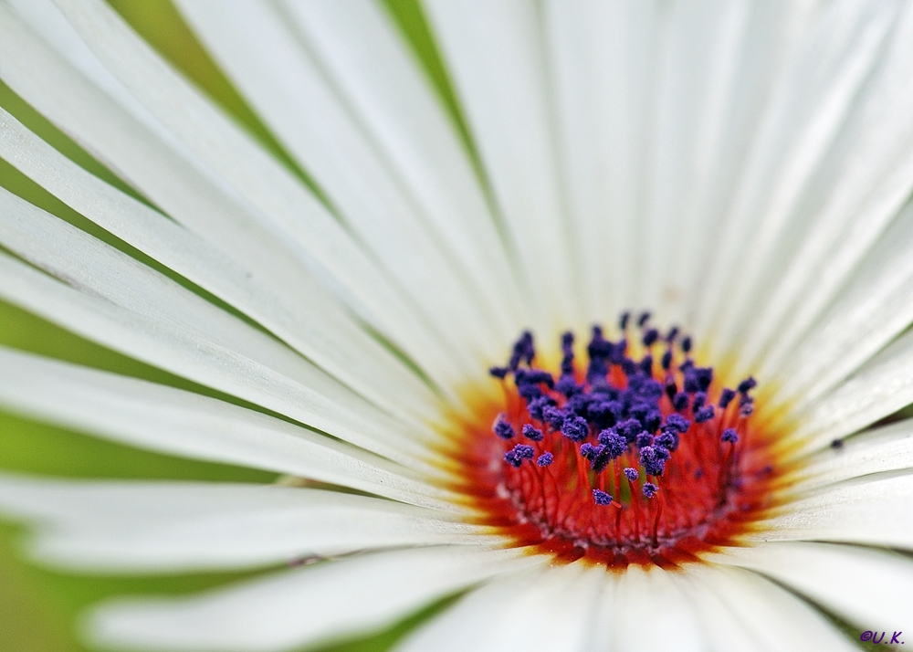 Eine Blüte zum Wochenende...