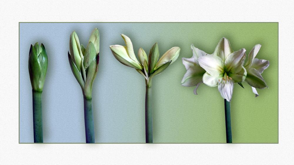 Eine Blütencollage
