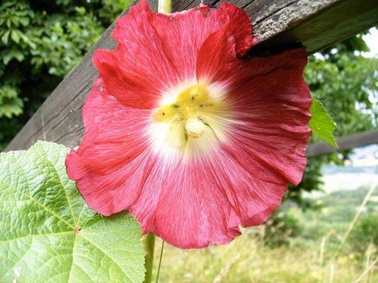 Eine Blume am Wegesrand...