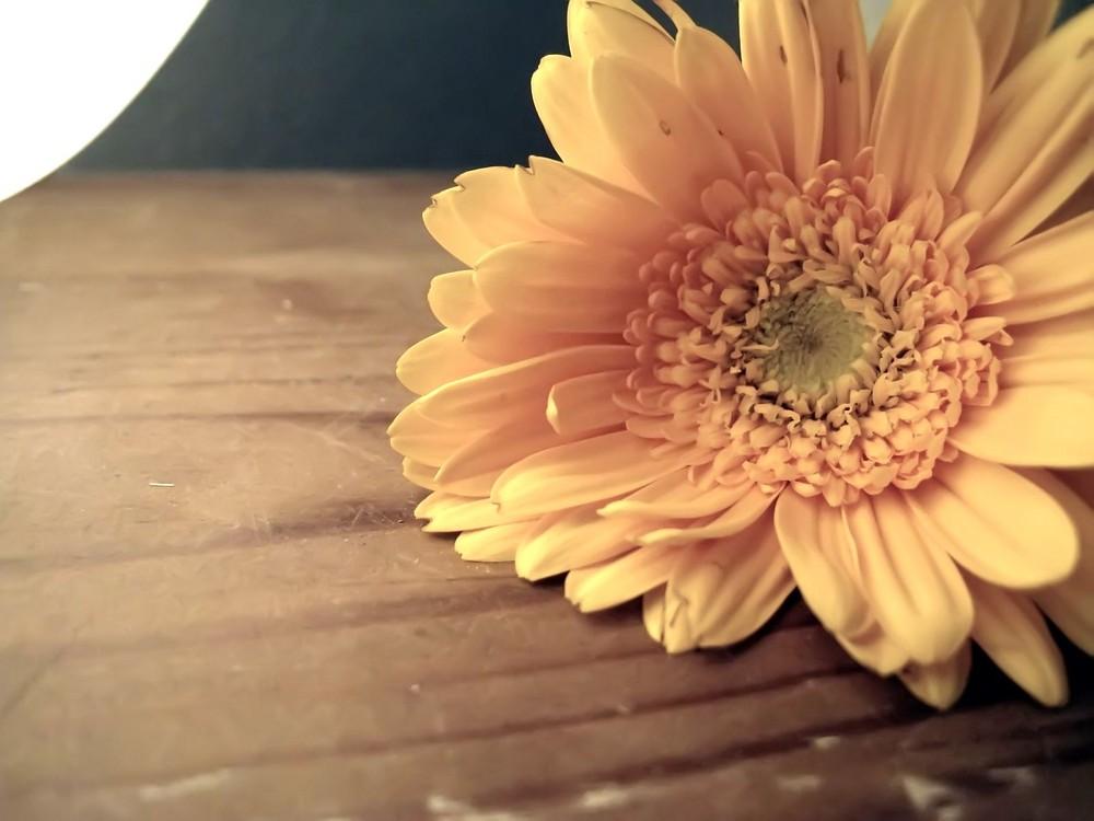 Eine Blume auf meiner Kommode^^