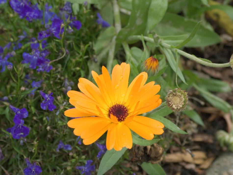 Eine Blume, eine Blume...