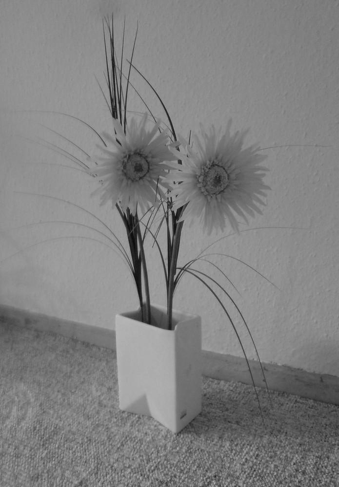 Eine Blume in meinem Wohnzimmer!