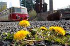 Eine Blume inmitten Industriekultur