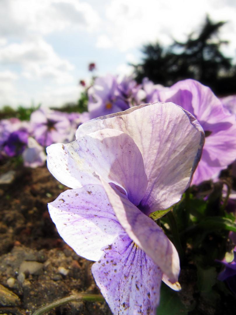 'Eine' Blume kommt selten allein!