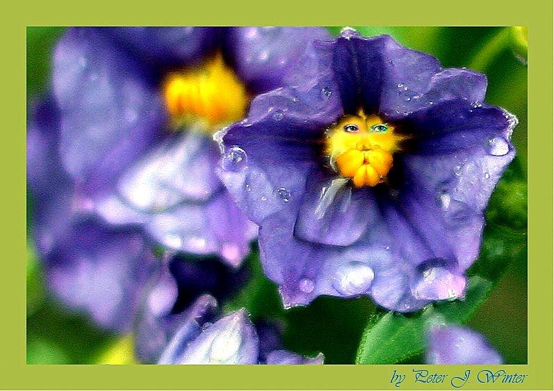 """Eine Blume Namens """"Enze"""""""