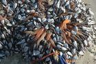 Eine bretonische Meeresspezialität