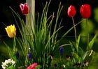 eine bunte Blumenwiese
