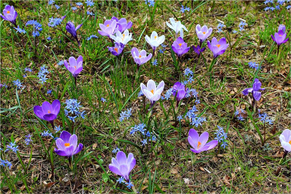 ... eine bunte Blumenwiese