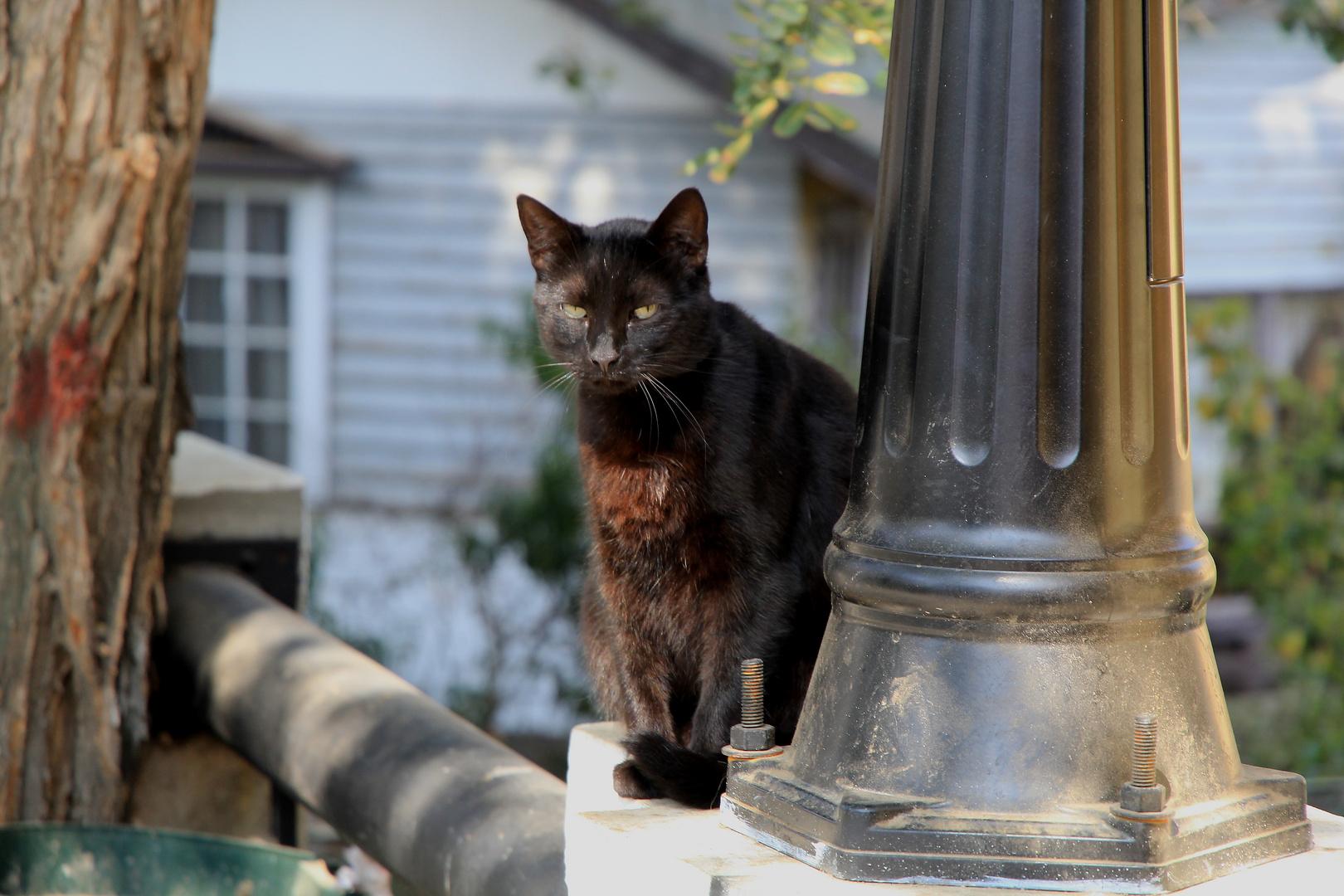 Eine Chilenische Katze in Valparaíso