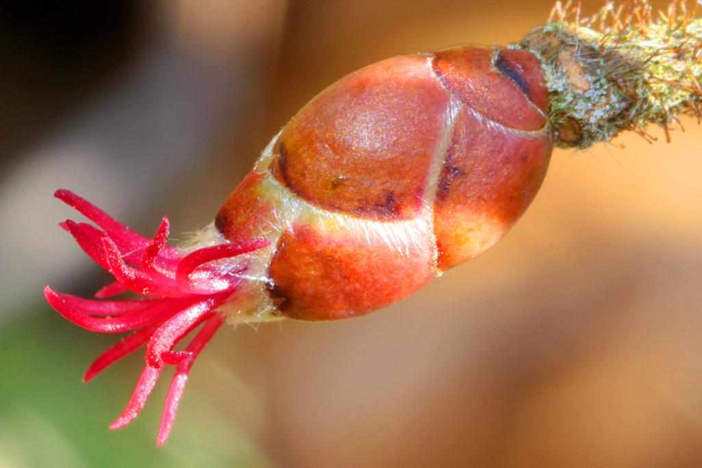 Eine der ersten Blüten