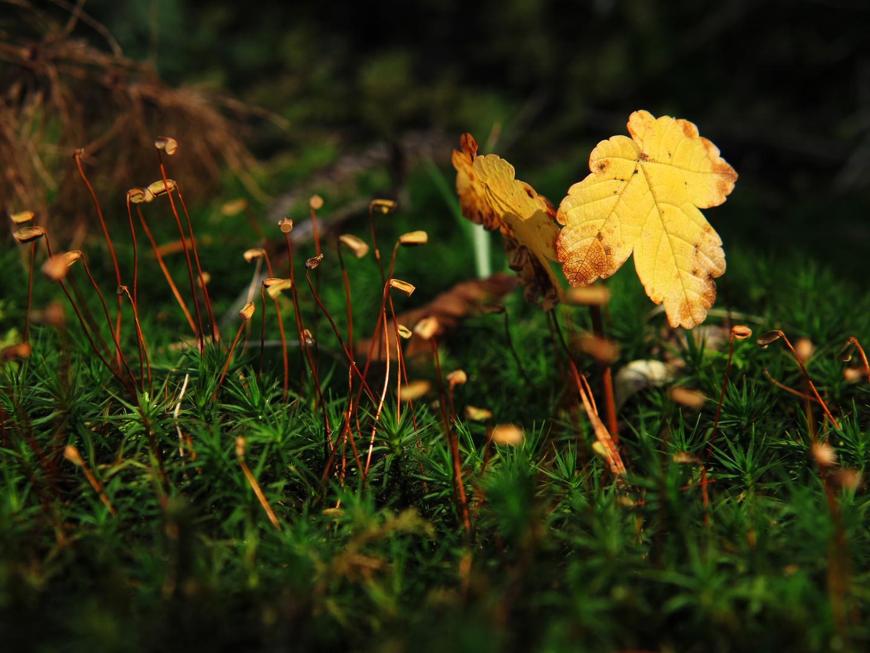 Eine DER Herbstfarben