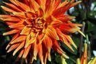 eine der letzten Blüte