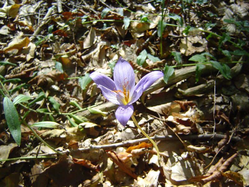Eine der letzten Blumen
