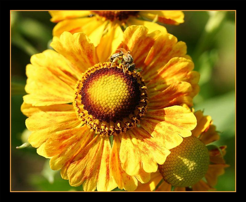 Eine echt schöne Blume...