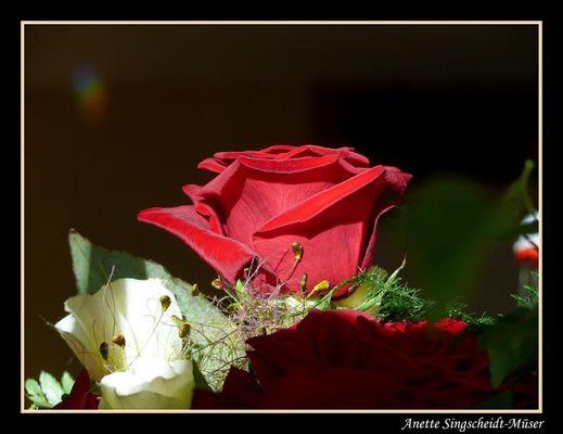 eine edle Blume