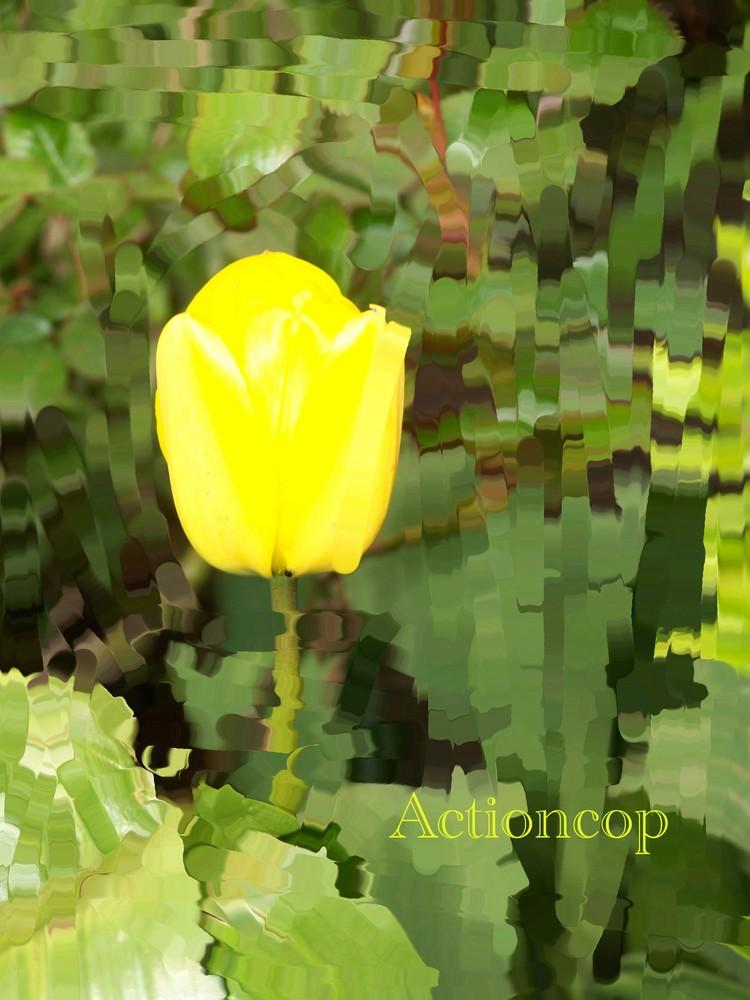 Eine einfache Tulpe