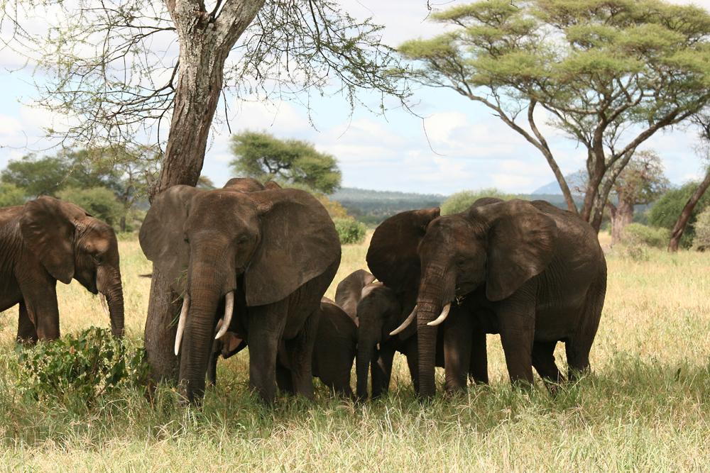 Eine Elefanten Familie