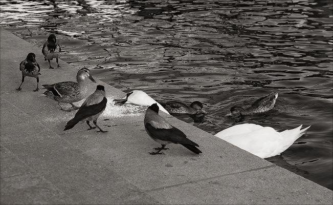 Eine Ente ...