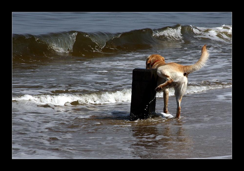 Eine Erhöhung des Meeresspiegels