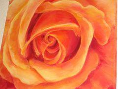 Eine erotische Rose