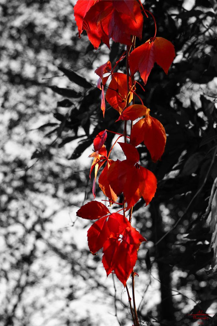 Eine Farbe des Herbstes