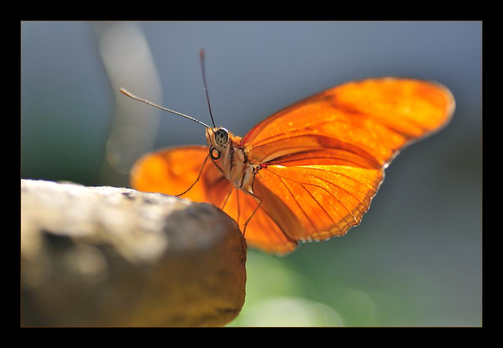 EINE Farbe: Orange