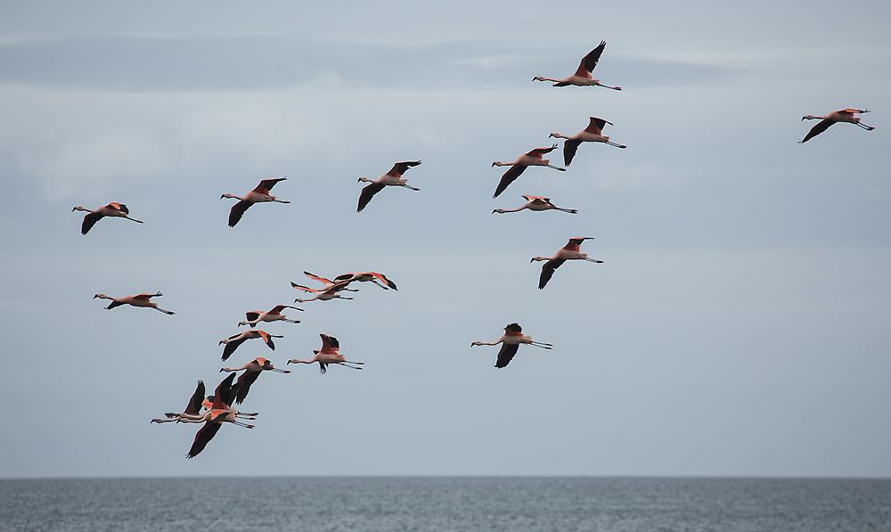 eine Flamingo-Gruppe...