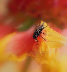 Eine Fliege..