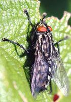 eine Fliege...