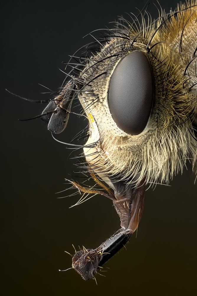 Eine Fliege