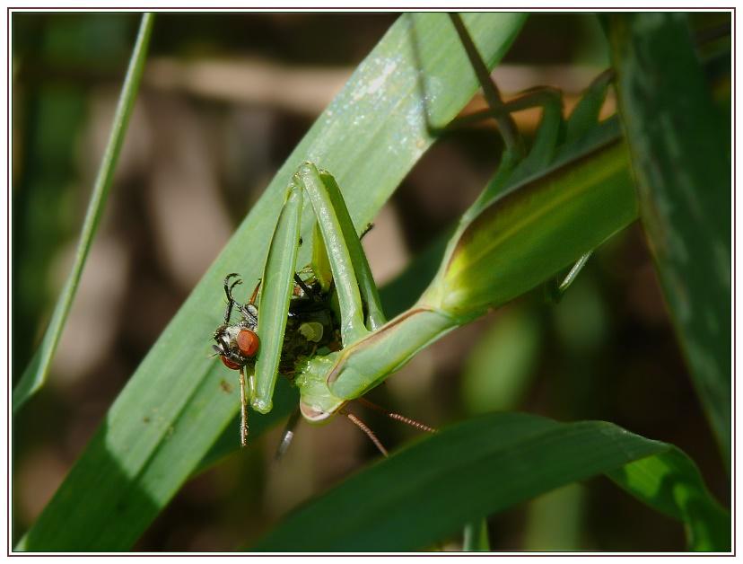 Eine Fliege gegen den kleinen Hunger