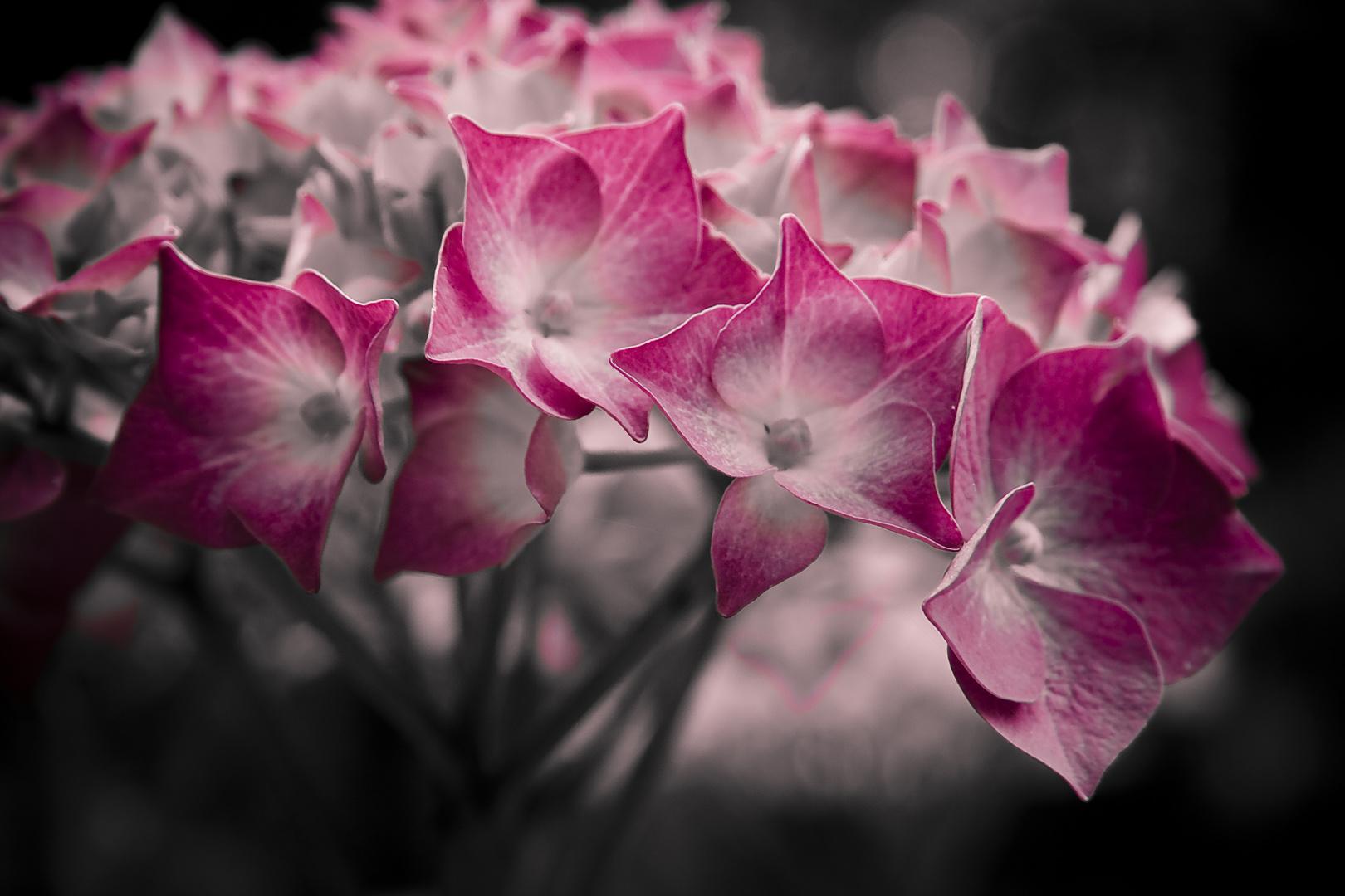 Eine Frau ohne Geheimnisse ist wie eine Blume ohne Duft. - Maurice Chevalier