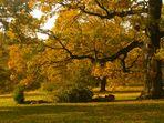 Eine Freundschaft mit dem Herbst 3