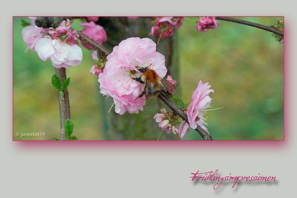 Eine Frühlingsimpression vom heutigem Tag