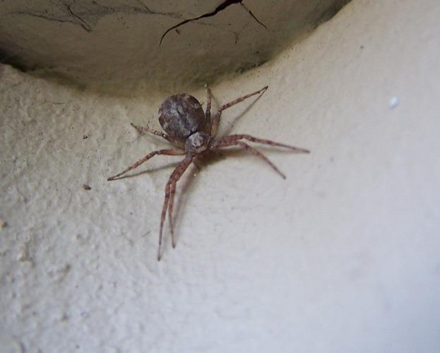 Eine ganz kleine Spinne