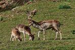 eine glückliche Hirschfamilie