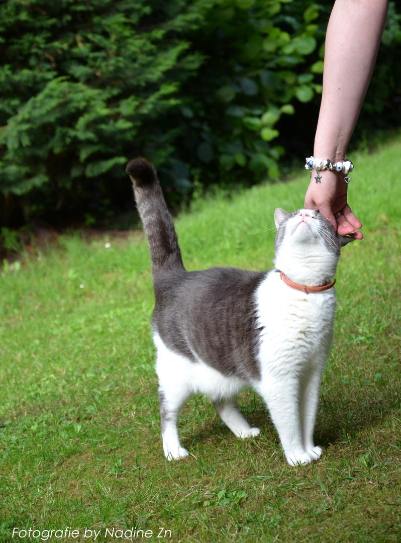 Eine glückliche Katze ist ein tolles Fotomodel:))
