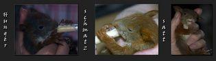 eine Hand voll Hörnchen von petra hoppe