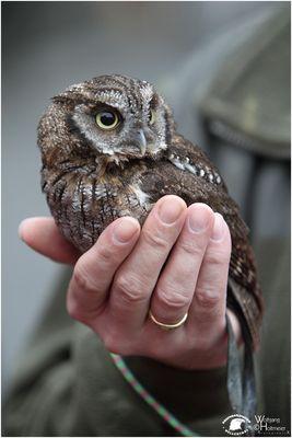 Eine Hand voll Vogel