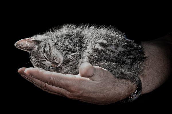 Eine Handvoll Kätzchen