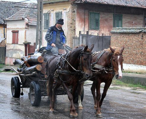 Eine Holzfuhre durch Boian