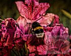 Eine Hummel auf einer Blume