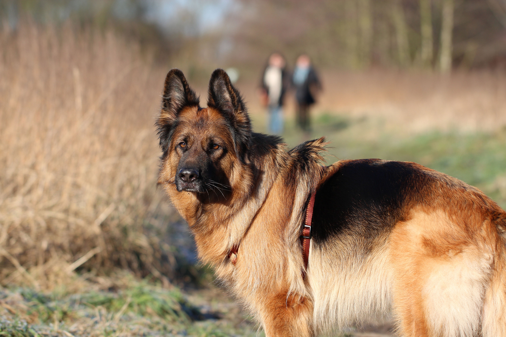 Eine Hundebekanntschaft