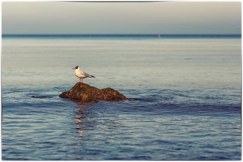 - Eine Insel -