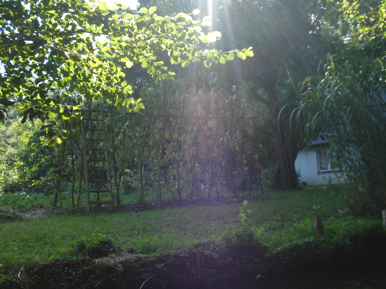 Eine Kahnfahrt durch den Spreewald mit Sonnenschein