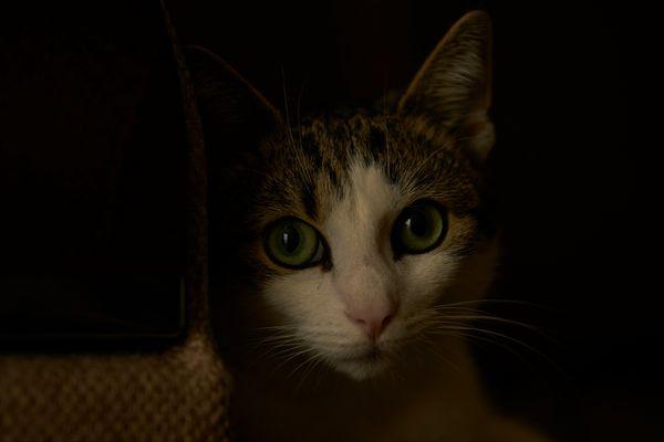 Eine Katze in der Dunkelheit