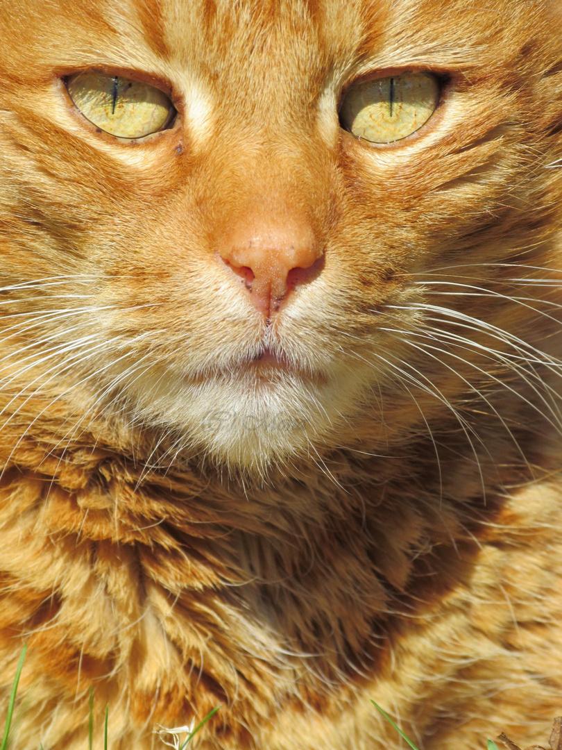 Eine Katze mit trauriger Geschichte.