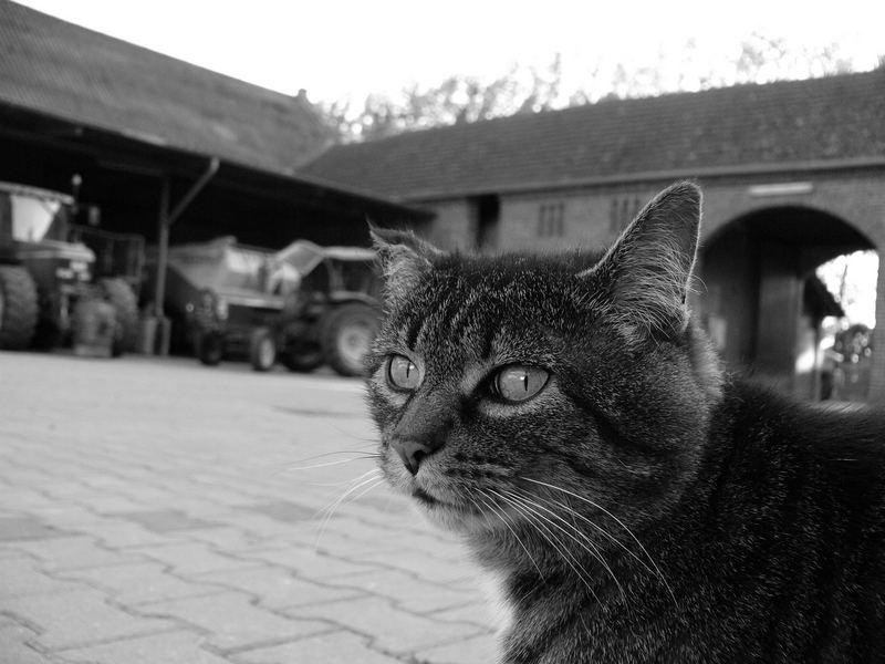 Eine Katze namens Puschi